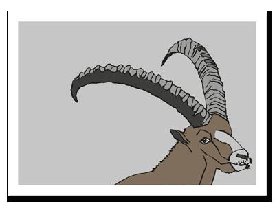 "zodiac sign postcard ""Capricorn"""